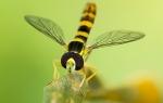 Insectos de doñana.