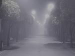 El abrazo de la niebla