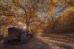 El bosque de cobre