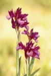 Tiempo de orquídeas silvestres