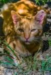 Me pareció ver un lindo gatito...