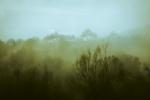 Visillos de Niebla