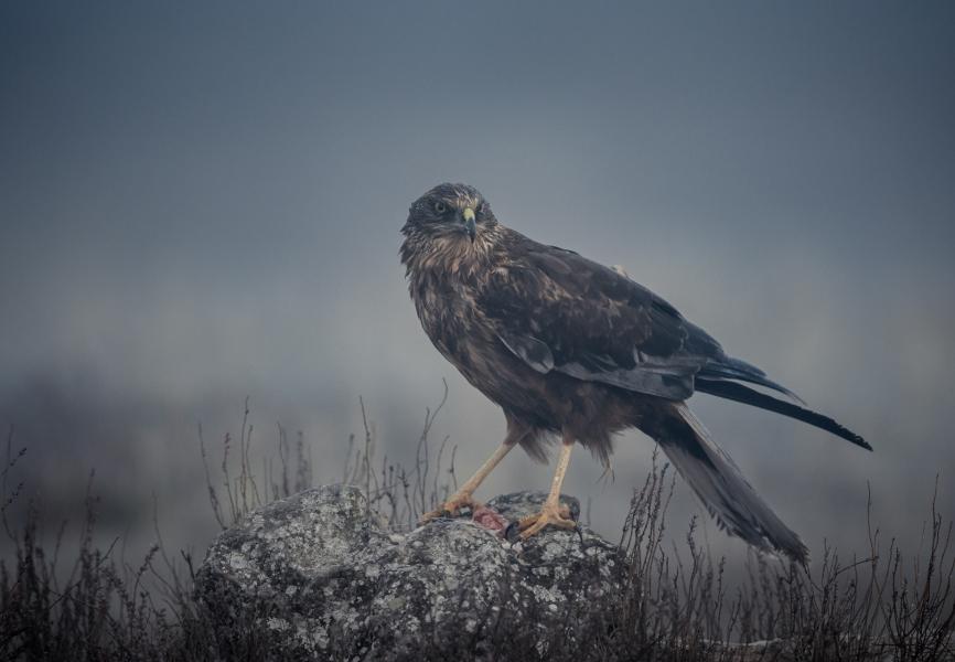 Lagunero en la niebla