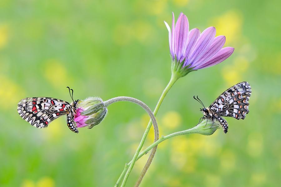 Dos arlequines y la flor