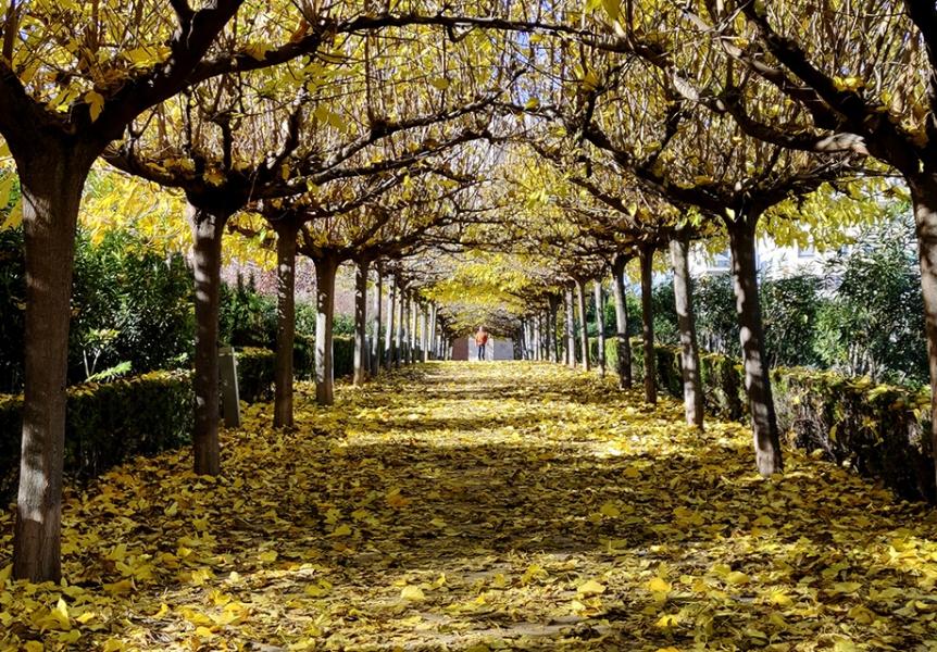 Fuga de otoño