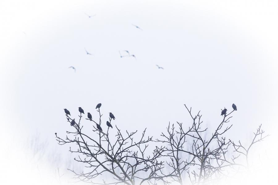 Invierno en la chopera