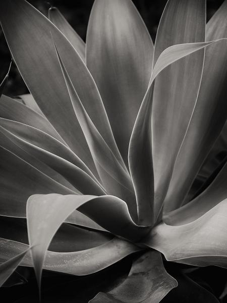 Jardines de Malaga