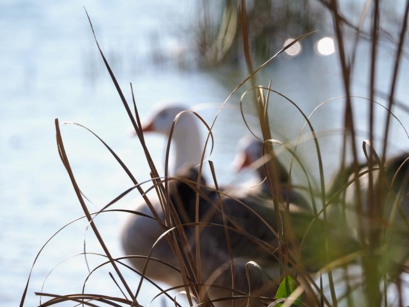 Detrás de las hierbas