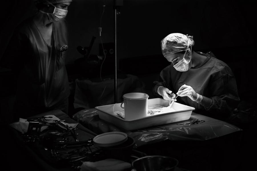 Preparando el riñón