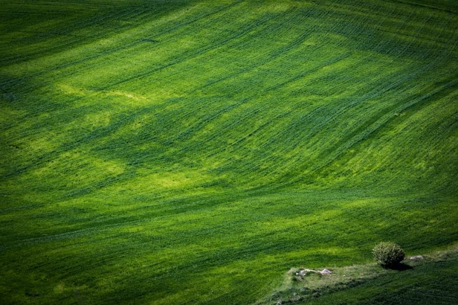 Prados verdes