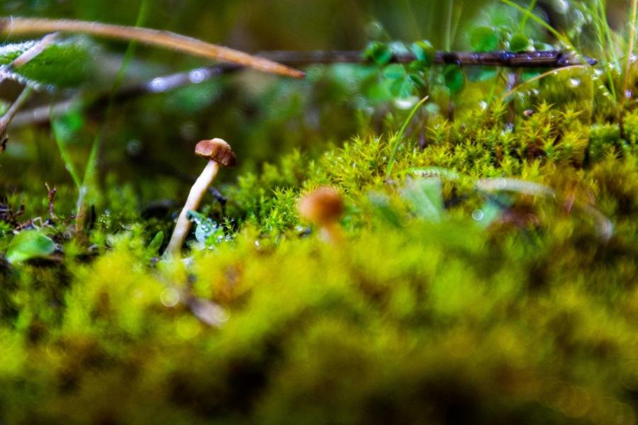 pequeño mundo