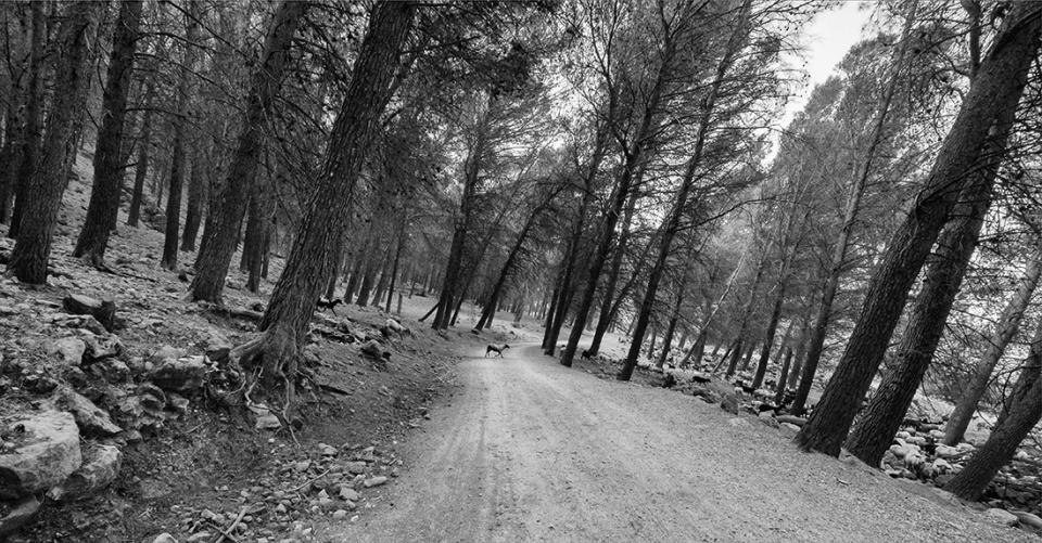 Cabra en el bosque