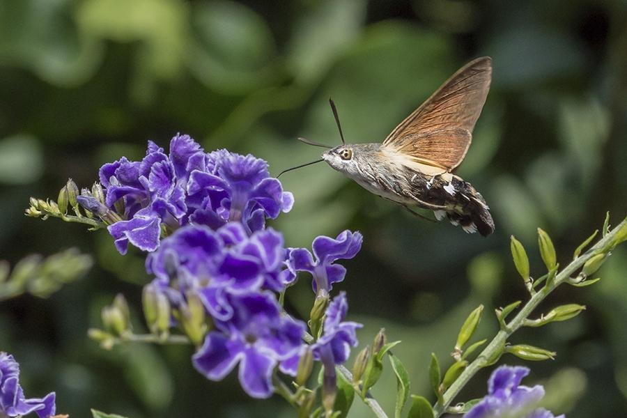 El néctar de la vida