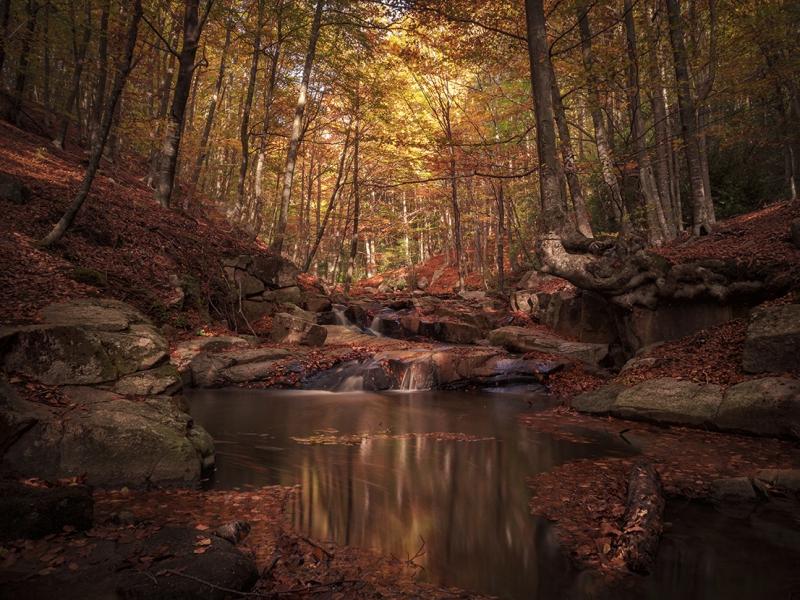 Colores de otoño