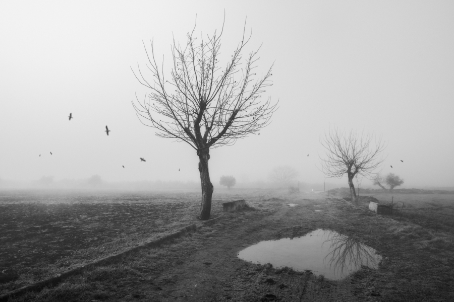 Este paisaje gris que me rodea