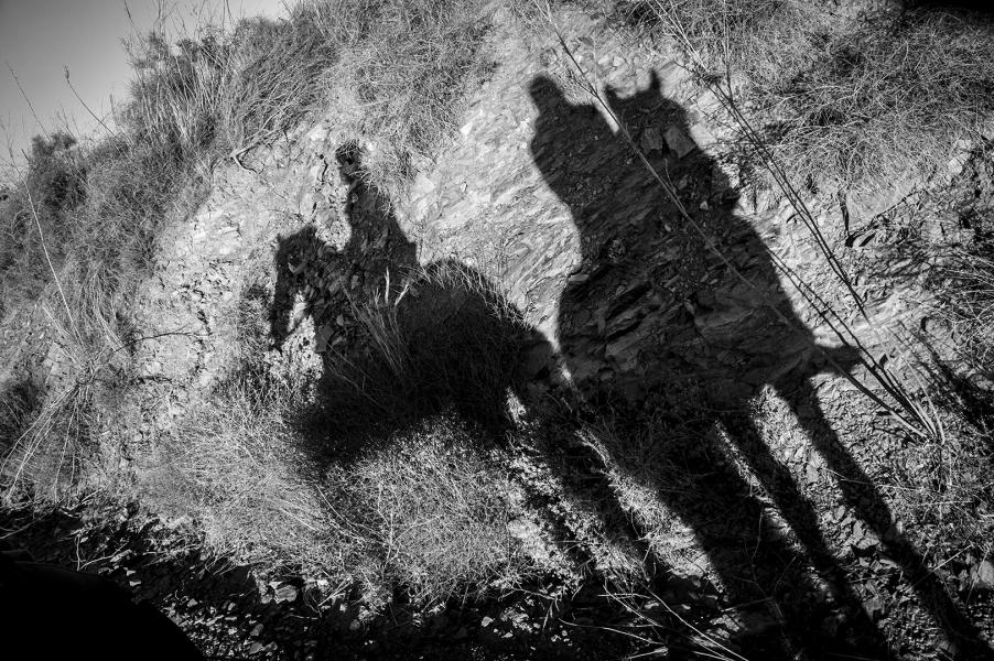 Sombras por el campo
