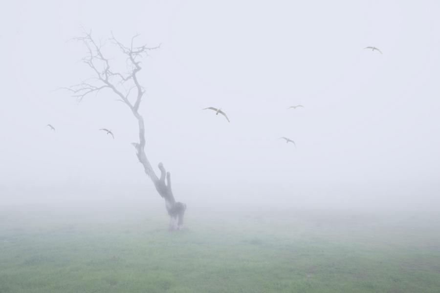 Vuelos en la niebla